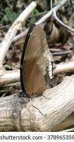 Black butterfly perched on a branch