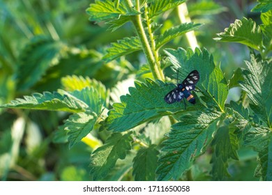 Tiger Leaf Stock Photos Images Photography Shutterstock