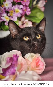 Black cat among the flowers.
