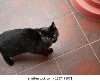 Black cat asks for food. Mystical black cat on the tile. A thin black stray cat asks for food. Black panther on a tile road.