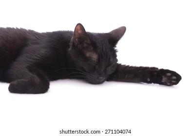 Black cat asleep on white, in a studio