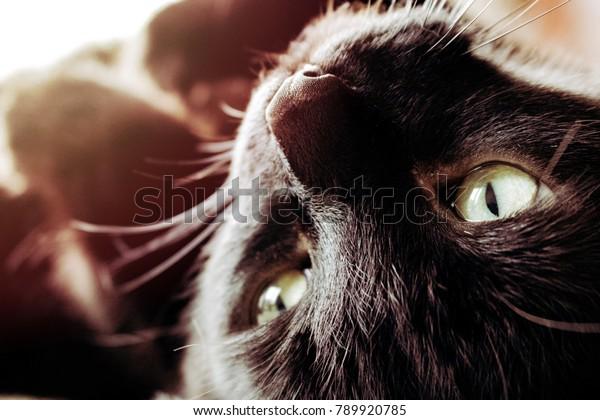 Black Cat Basking in the Sunlight