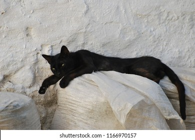 Black cat with bright green eyes taking afternoon nap in Skyros town Greece