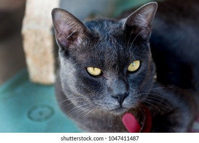 black cat with bright yellow eyes looking at camera.