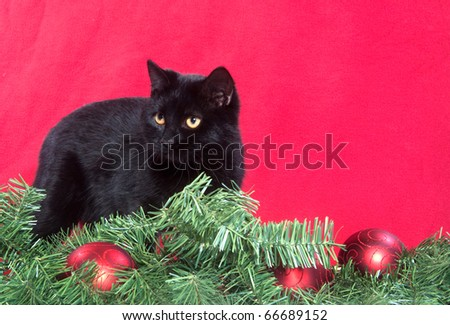 black cat with christmas decorations on red background