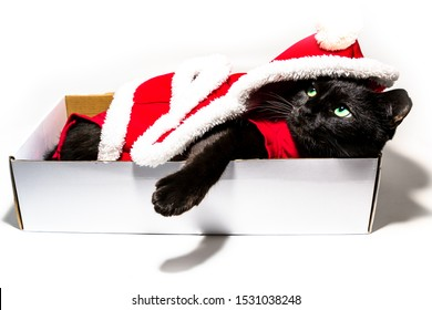 Black cat in Christmas dress and Santa Claus hat resting on studio white background. resting and looking down with copy space.