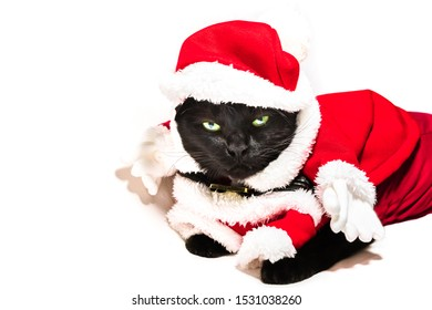 Black cat in Christmas dress and Santa Claus hat on studio white background and copy space for greeting card.