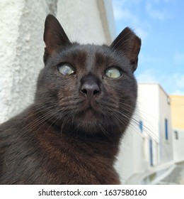 Black cat with a clipped ear in Santorini Island. The clipped ear is a mark that shows that a stray cat has been neutered.
