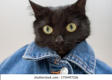 Black cat in clothes. Cat wearing jeans jacket.