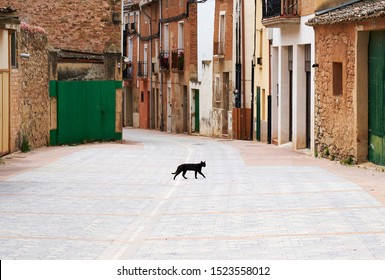 Black cat crossing the street. For the superstitious this is bad luck coming!