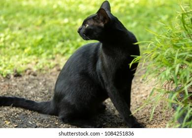 Black cat cute