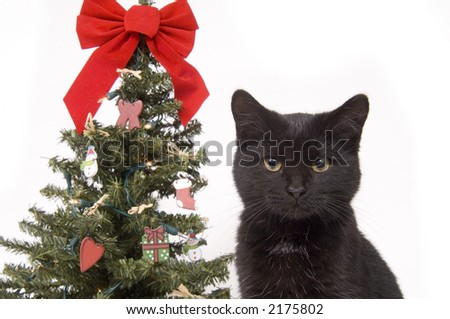 a black cat with a decorated christmas tree in in the background on white