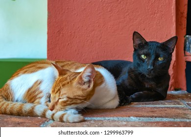 Black cat directly looks at camera while yellow cat relaxing.