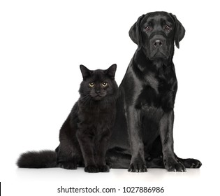 Black cat and dog together posing on white background. Animal themes