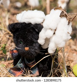 Black cat doll sit in the cotton fields