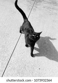 A black cat enjoying the day