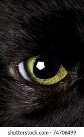 black cat eye wide open