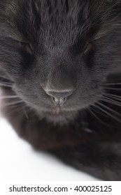 Black cat with eyes closed close-up