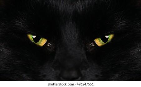 Black Cat Eyes Yellow