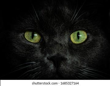 Black cat face close up