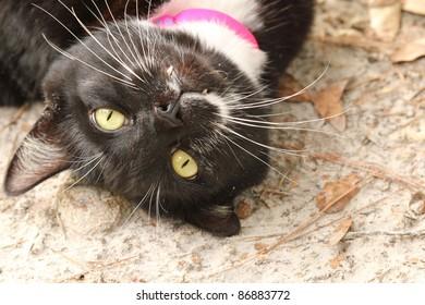 Black Cat Face Upside Down