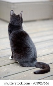 Black cat facing away and looking into distance.