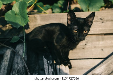 Black cat in garden, baby animal