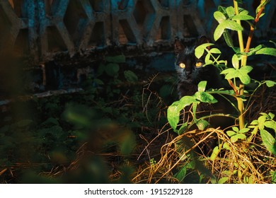 Black cat with geen eyes hiding behind a plant in the garden on a sunny day