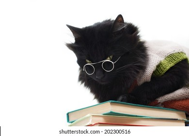 Black cat with glasses lying on books. Copy space