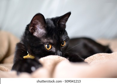 black cat with golden eyes staring over edge of blanket intently
