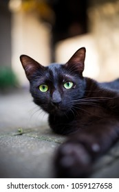 Black cat with green eyes laying outdoors.
