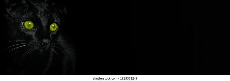 Black cat with green eyes on a black background, website designer. Portrait of a black cat, banner.