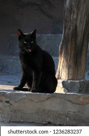 Black cat with green eyes and red tongue sits on the stone steps