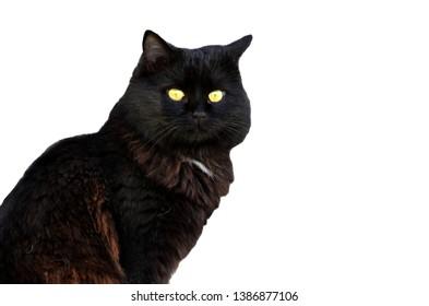 Black cat with green eyes sitting isolated on white background,photo