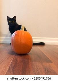 Black cat Halloween with pumpkin