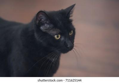Black cat head