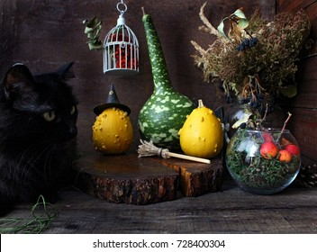 black cat heloween