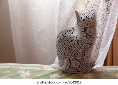 Black cat hidden behind a translucent white curtain