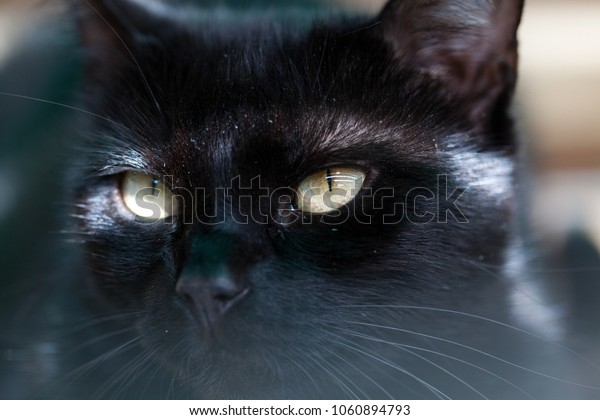 black cat hiding - focus on the eyes