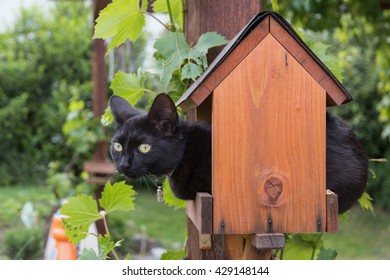 black cat holed up in a bird feeder