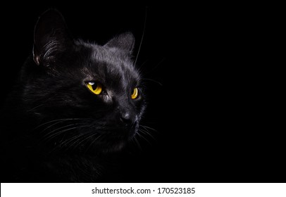 Black cat is isolated a black background