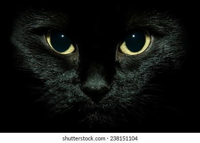 black cat isolated on black