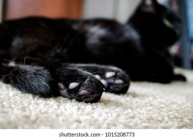Black Cat and Jellybean Toes