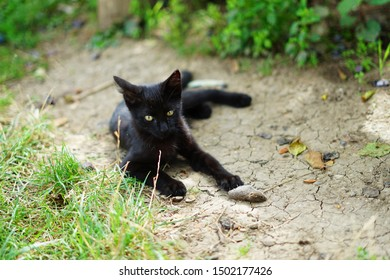 Black cat or kitten just catched small mouse in garden