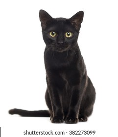 Black Cat No Background Images, Stock Photos \u0026 Vectors