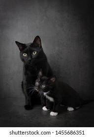 Black Cat and Kitten on Dark Background