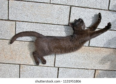 black cat lies on the ground and stretches in the sun