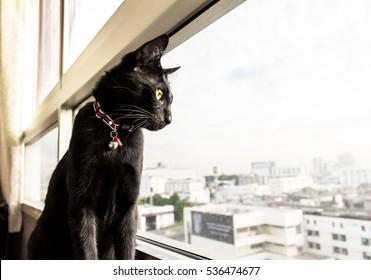 黒猫がマンションの窓の外を見て、バンコクの街を見る。
