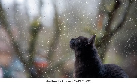 black cat looking outside through a window with raindrops