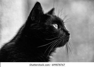 Black cat looking through the window